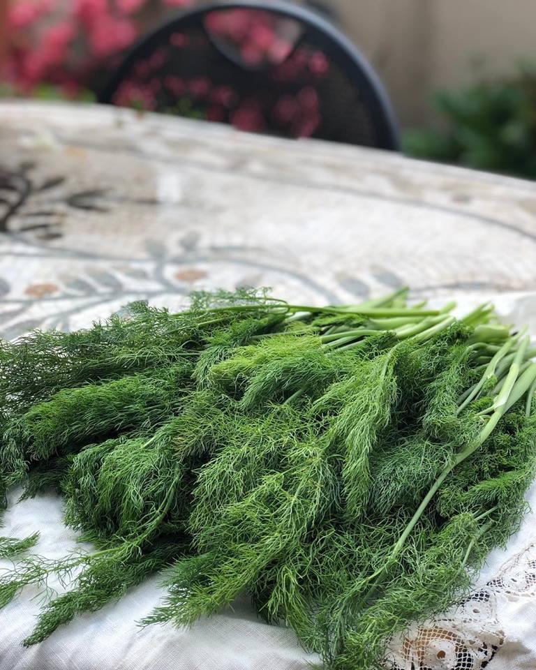 Wild fennel pesto